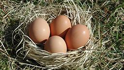 resazed 卵の郷 いわき地養卵2