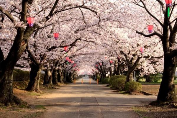 resazed デジカメ散歩 鈴鹿ブログ